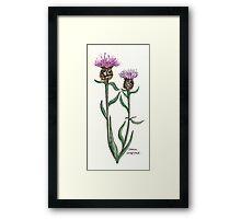 Common knapweed Framed Print