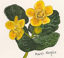 Marsh marigold by Sam Burchell