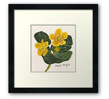 Marsh marigold Framed Print