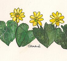 Celandines by Sam Burchell