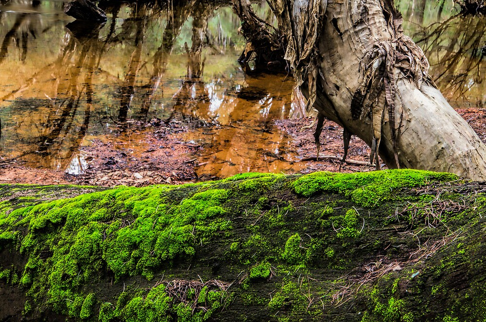 Nature Abstract by Ladyshark