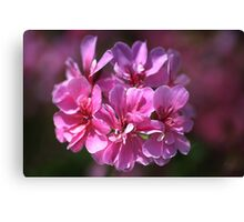 Geranium Pink Wish Canvas Print