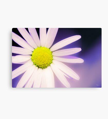 Beautiful flower, beautiful colour Canvas Print
