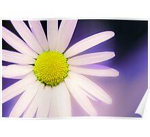 Beautiful flower, beautiful colour Poster