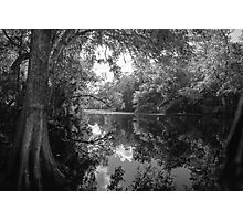 Deep Swamp Photographic Print