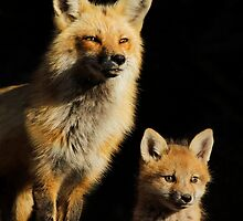 Family Portrait by MIRCEA COSTINA