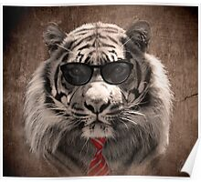 Cool cat! Poster