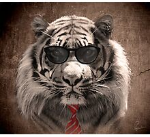 Cool cat! Photographic Print