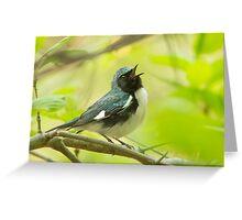 Singing Warbler Greeting Card