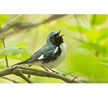 Singing Warbler Photographic Print