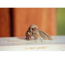 Lepidoptera  Photographic Print