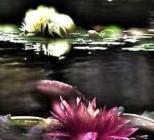 Lotus Flowers @ Dallas Arboretum by Rob Phillips