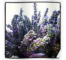 Bouquet of Lavender Poster