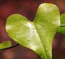 Wild heart by Atman Victor