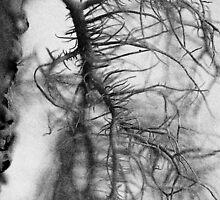 Tree moss by lumiwa