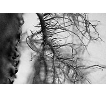 Tree moss Photographic Print