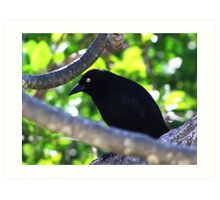 Carib Grackle Art Print