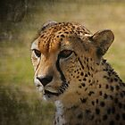 Male Cheetah by CraigSev