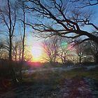 Winter Sun 2 by GraemeHeddle