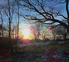 Winter Sun 2 by GraemeHeddle