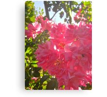 Governor Generals Roses #26 Canvas Print