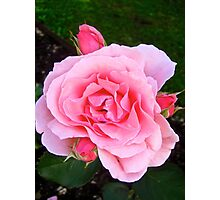 Governor Generals Roses 30 Photographic Print