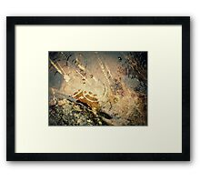 Winter Of Discontent Framed Print