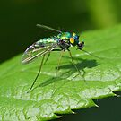 Long-legged Fly by William Brennan