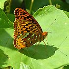 Spangled Fritillary Butterfly by William Brennan