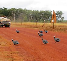 Turkeys at Bramwell Station, Cape York by dozzam