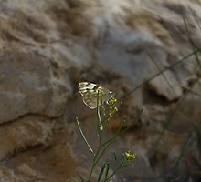 Moth and Sandstone #1 by Paul Danger Kile