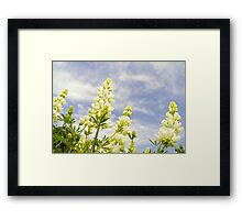 Lupin tree giants Framed Print