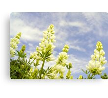 Lupin tree giants Canvas Print