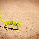 Chameleon by Clive S