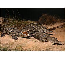 Juvi Crocs Photographic Print
