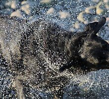 Black Labrador Dog Water Shake by tallmancreative