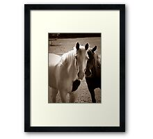 Two Horses in Sepia  Framed Print