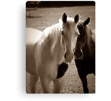 Two Horses in Sepia  Canvas Print