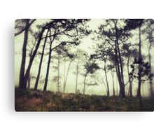 Mystery in the woods Canvas Print