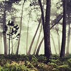 foggy woodland by DCarlier