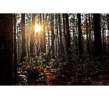 The Dark and Mysterious Forest Photographic Print