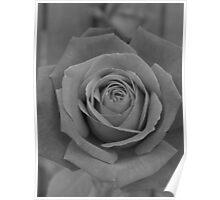 Restful Rose Poster