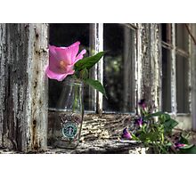 Starbuck with Wildflowers Photographic Print