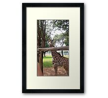animal kingdom Framed Print
