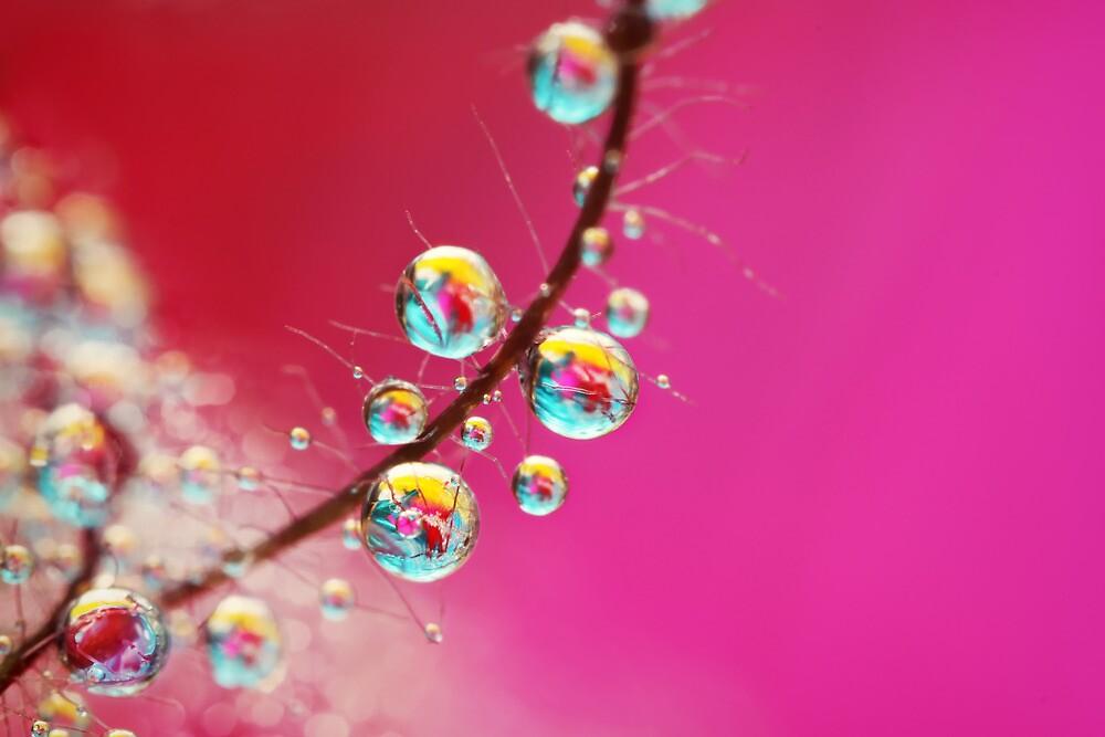 Smoking Pink Drops by Sharon Johnstone