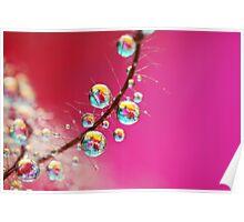 Smoking Pink Drops Poster