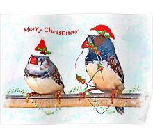 Festive Finches Poster