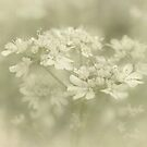 When the coriander blooms.... by Yool