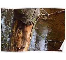 Tree Trunk & Water Poster
