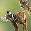 The owl and the woodpecker by greenbunion